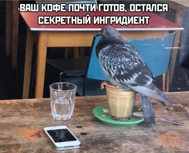 картинки, прикольные картинки, картинки с надписями, голубь, кофе