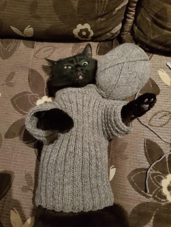 фото, котэ, свитер