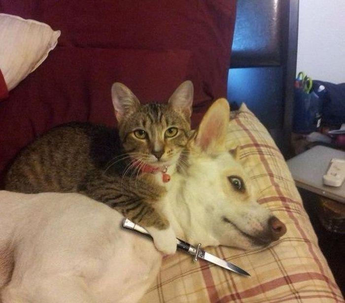 фото, прикольные картинки, собакен, котэ