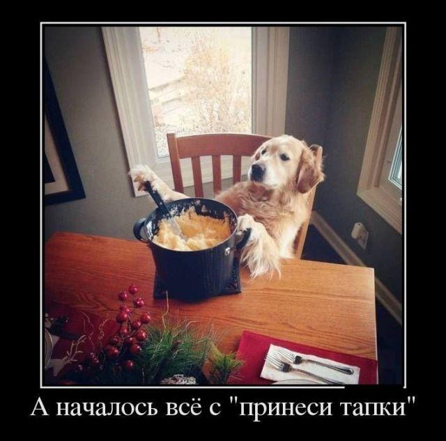 демотиваторы, собакен