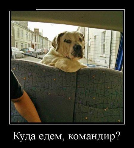 демотиваторы, картинки, собакен