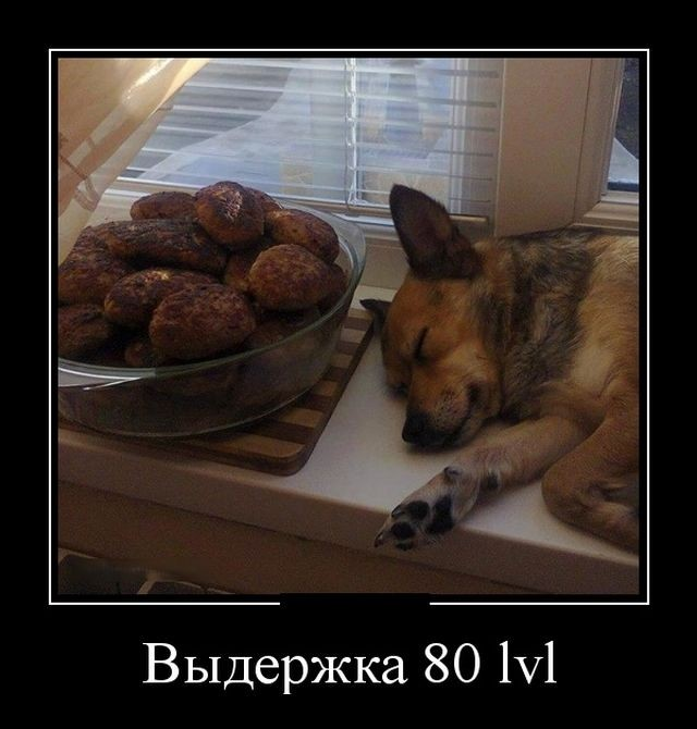 демотиваторы, собакен, выдержка