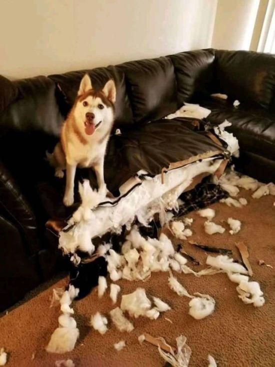 фото, собакен, разное