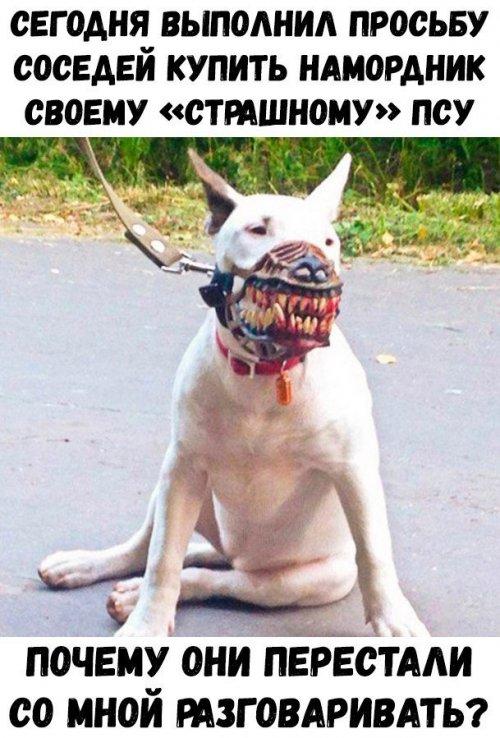 собакен, намордник, картинки, юмор, картинки с надписями