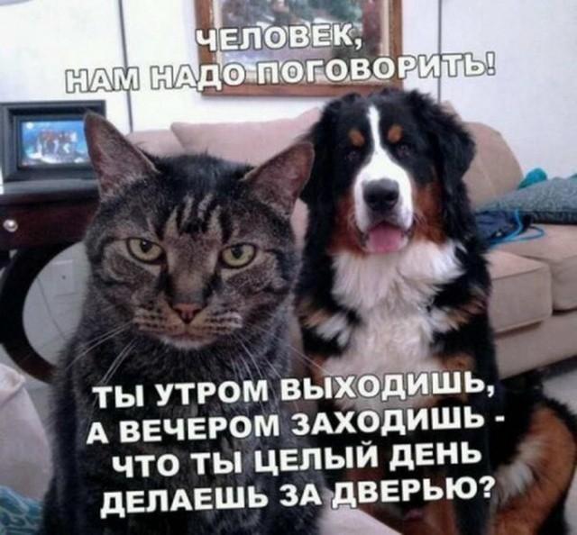 картинки, прикольные картинки, картинки с надписями, котэ, собакен