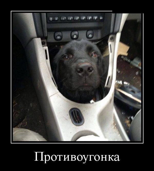 демотиваторы, противоугонка, собакен