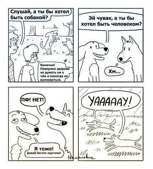комиксы, картинки, прикольные картинки, собакены