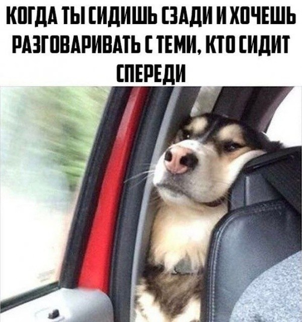 собакен, фото, картинки с надписями
