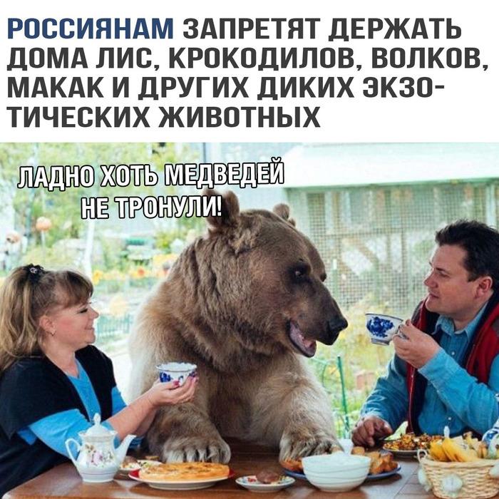 картинки, прикольные картинки, картинки с надписями, страны, Россия, животные, медведи
