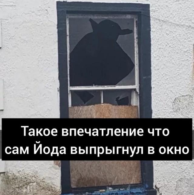 фото, окно, Йода, разное, картинки с надписями